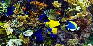 Tropical fish with coral, clams and anemones in the background.