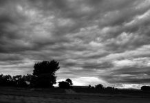 spooky landscape trees