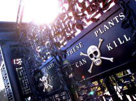 The Alnwick Garden - Poison Garden
