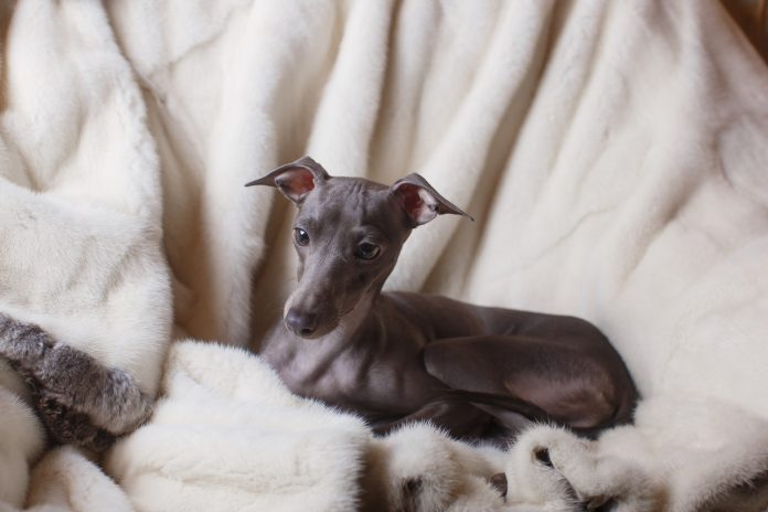 North East Company In Search For Dog Models