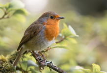 Barratt Developments Partners With Wildlife Charity RSPB For Nature-friendly Housing
