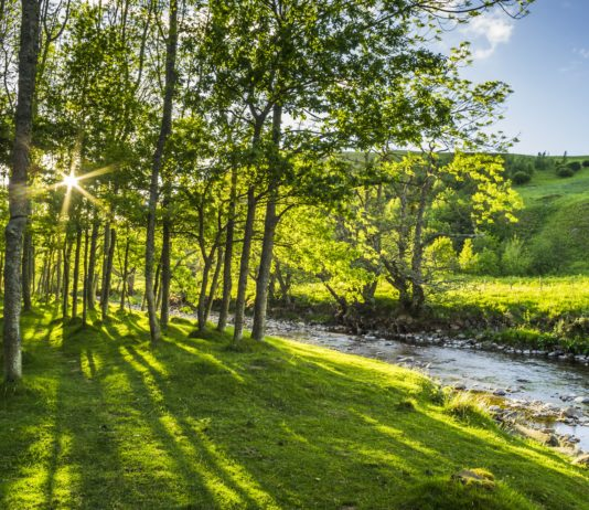 A New 'Right Tree in the Right Place' Study Welcomed By Northumberland National Park