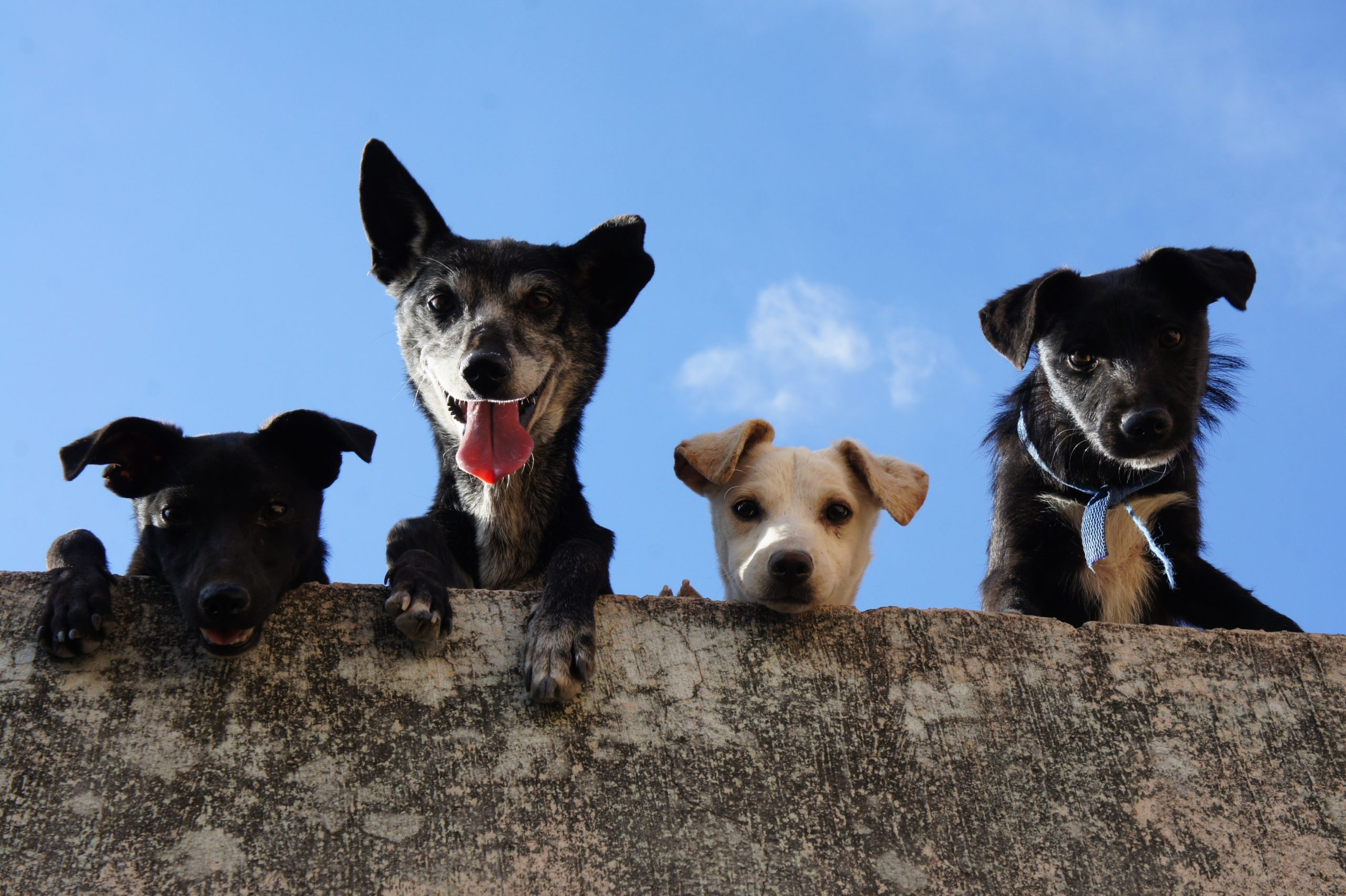 dogs on film festival