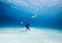 Brand New Short Film At This Year's Ocean Film Festival