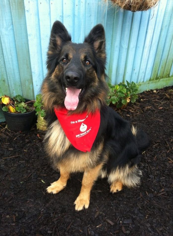 Pet Blood Bank UK On The Lookout For Dogs To Donate Blood