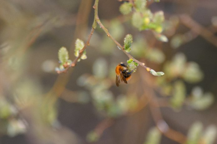 New Conservation Project For Bees At Northumberland Park Receives Funding